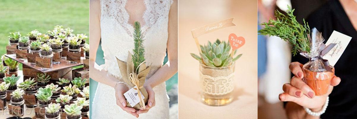prezent dla gości sadzonka roślinki